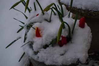 snow-8